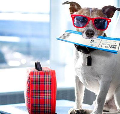 Правила перевозки в самолете собак по России и за границу: как перевозить питомца, можно ли отправить его одного?