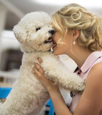 Каких собак можно заводить людям с аллергией: список гипоаллергенных пород с описаниями и фото