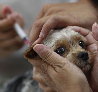 Как правильно сделать собаке укол подкожный в холку или в бедро внутримышечный на дому?