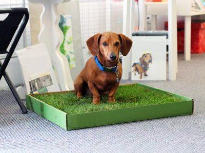 Как приучить щенка или взрослую собаку ходить в туалет на улицу или в одно место в квартире или доме?