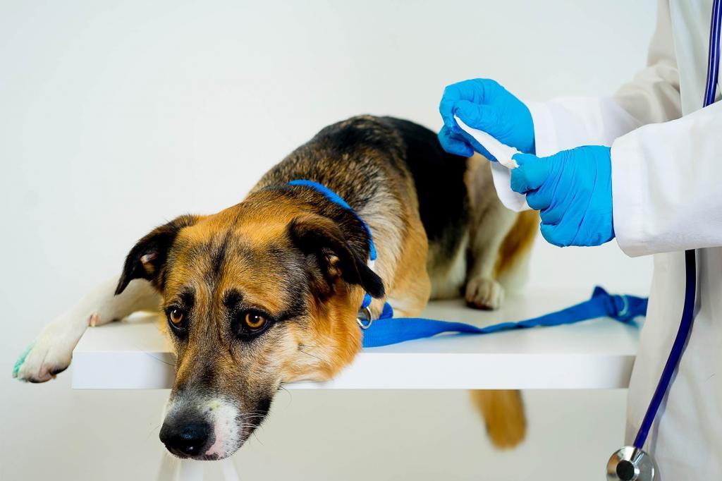 картинки с осторожна собака не стерильна рыбный салат