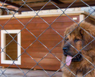 Как самому построить для собаки вольер: проекты и фото уличных и домашних конструкций