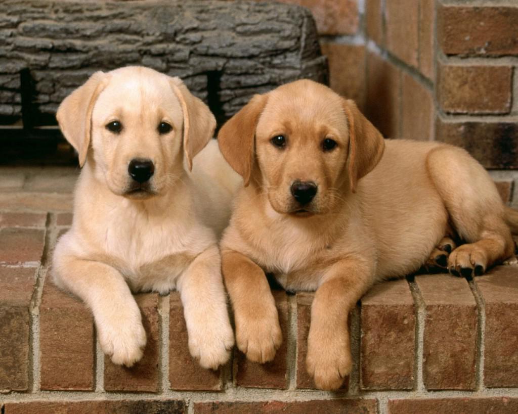 Все о породах собак: названия, фотографии, характеристики и особенности ухода