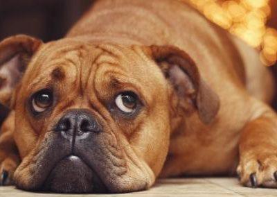 Симптомы и лечение почечной недостаточности и других болезней почек у собак
