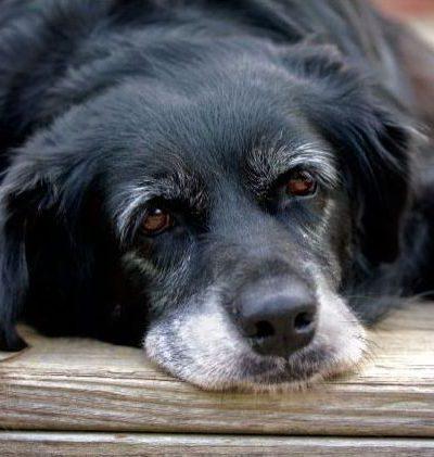 Что делать, если у собаки обнаружен запор: как помочь питомцу в домашних условиях?