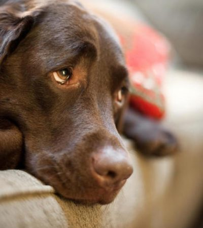 Как усыпить здоровую или больную собаку на время или навсегда самому в домашних условиях, как это делает ветеринар?