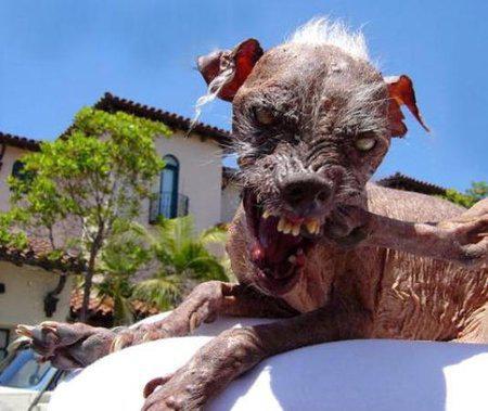 Самые страшные собаки в мире: рейтинг некрасивых пород с фото и описаниями