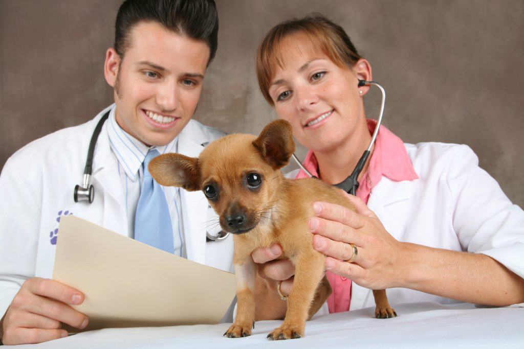 Прививки щенкам до года: таблица и график 2