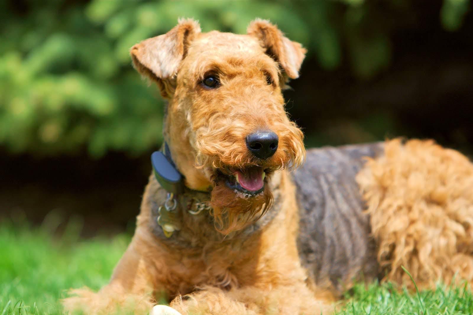 Названия, описание и фото самых известных английских пород собак, редкие и старинные виды