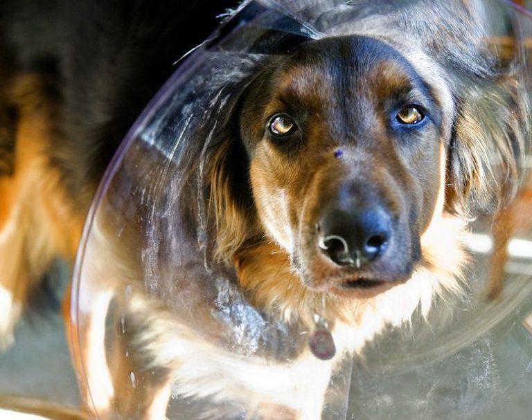 Лишай у собак – фото, признаки, симптомы и лечение 11