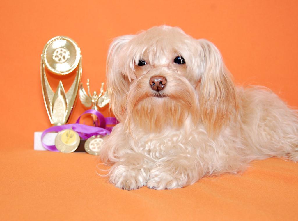 Описание петербургской орхидеи: стандарт породы и фото, характер и особенности ухода, содержание и кормление собаки