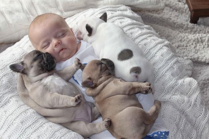 Бульдог спит
