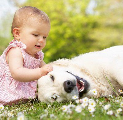 Какие собаки считаются самыми добрыми: породы больших и маленьких ласковых, добродушных и безобидных питомцев для семьи
