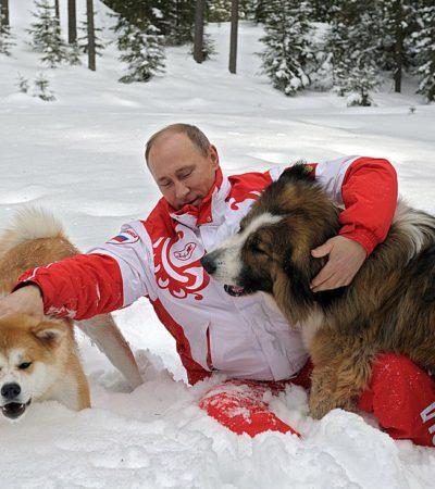 Все собаки Владимира Путина с фото и кличками: питомцы каких пород живут у Президента России?