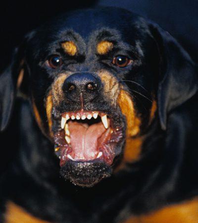 К чему снится злая собака, которая нападает, кидается и пытается укусить или кусает: толкование сна по сонникам