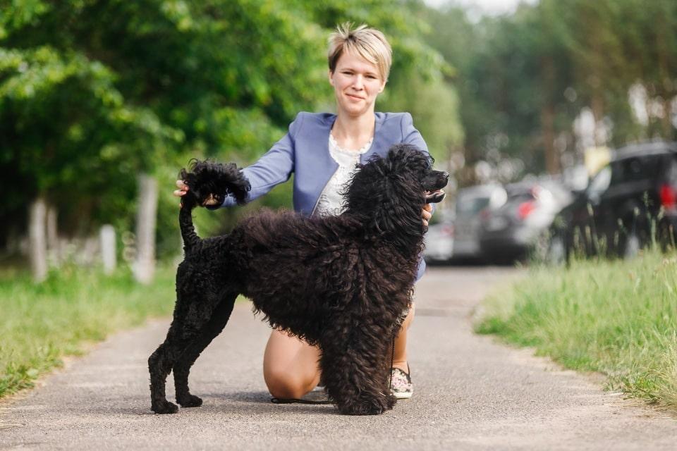 Гипоаллергенные породы собак Топ-30 собак для аллергиков и астматиков 1