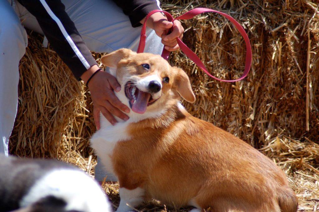 Кашель у собак: какой бывает, причины, лечение 5