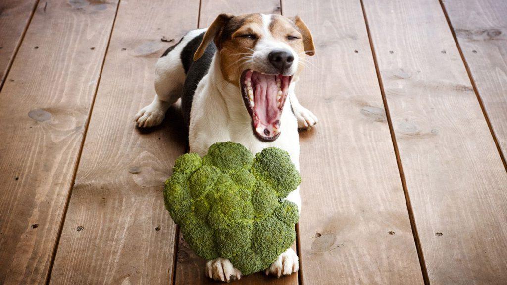 Собака На Растительной Диете. Диета для друга: безопасен ли растительный рацион для кошек и собак?