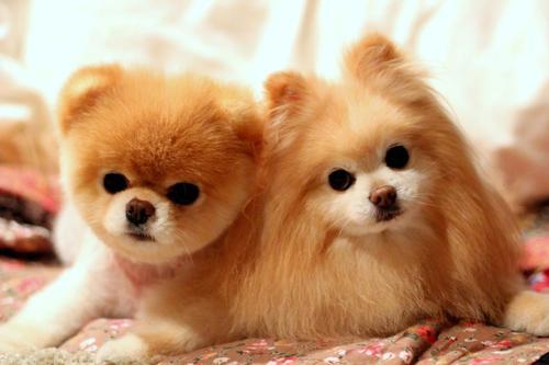 Самые красивые и милые породы собак в мире с фото и названиями: большие и маленькие, пушистые и гладкошерстные