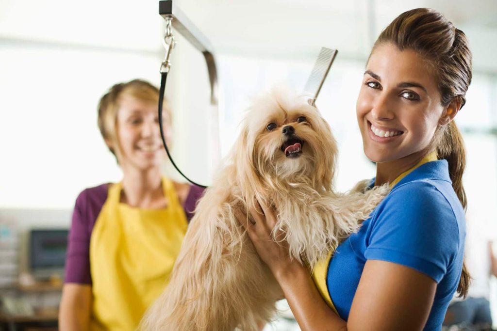 Собаки парикмахерская картинки