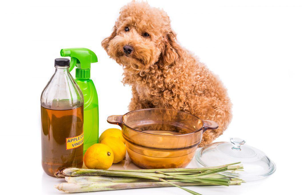 Лишай у собак – фото, признаки, симптомы и лечение 12
