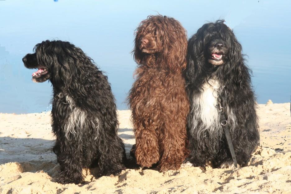 Гипоаллергенные породы собак Топ-30 собак для аллергиков и астматиков 2