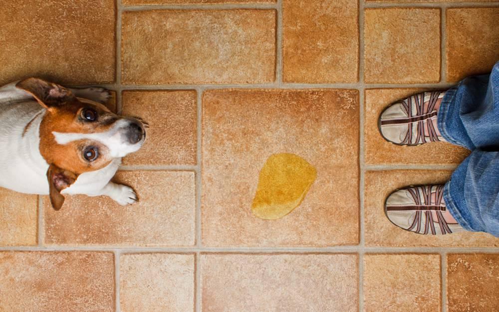 собака застудила мочевой пузырь