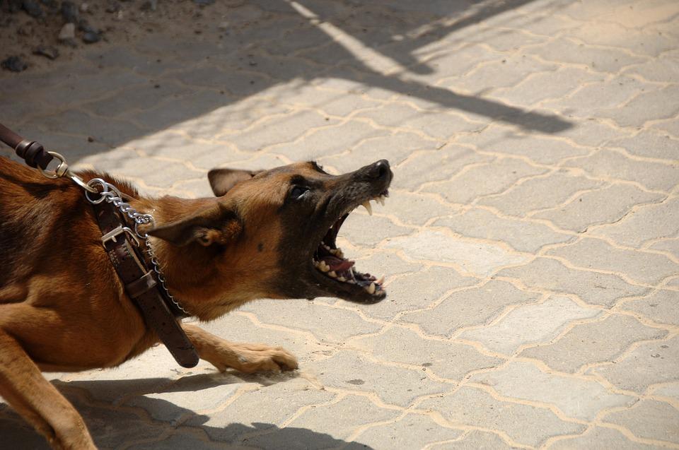 Кашель у собак: какой бывает, причины, лечение 2