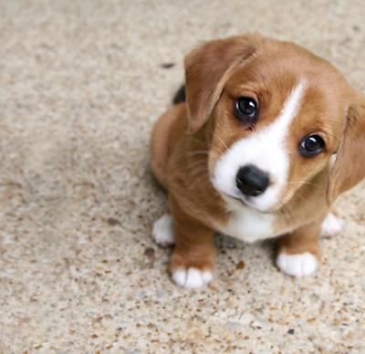 Слезятся глаза у собаки: почему, чем лечить животное в домашних условиях?