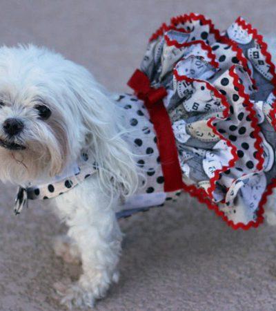 Выкройки в натуральную величину и основы пошива комбинезона и другой одежды для йорка и прочих маленьких и больших собак
