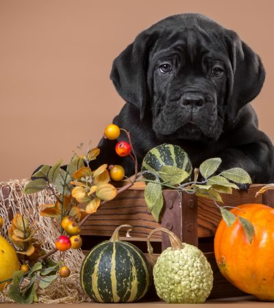 Можно ли собакам давать огурцы, помидоры, кабачки и другие овощи и в каком виде?