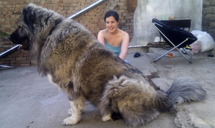 Кавказец с хозяйкой