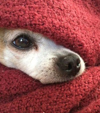 Почему собаку может знобить, что делать, если она дрожит мелкой дрожью и трясется: причины и лечение