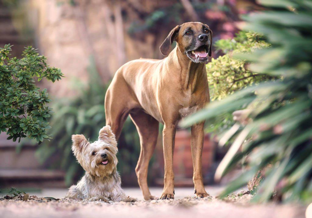 Определяем возраст собаки по человеческим меркам с помощью таблицы