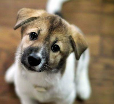Клички для собак-девочек крупных и маленьких пород: легкие и редкие, красивые и прикольные женские собачьи имена