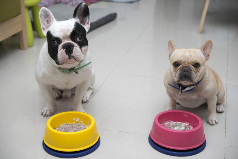Диета Для Щенка Французского Бульдога. Питание французского бульдога: как правильно кормить щенка, сколько раз, подходящие корма