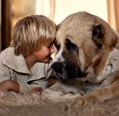 Таблица соотношения возраста собаки и человека: сколько лет питомцу по человеческим меркам?