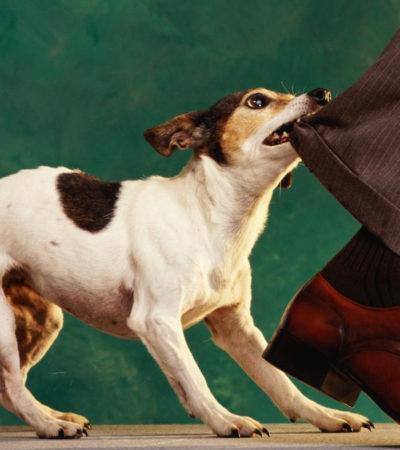 Что делать, если покусала уличная собака: первая помощь при укусе и лечение в домашних условиях