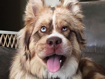 Что делать, если взрослую собаку или щенка укусила оса, как оказать помощь в домашних условиях и чем опасен такой укус?