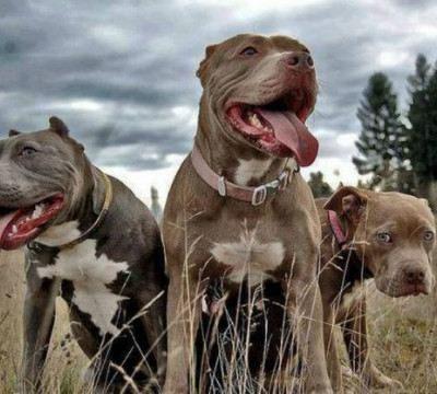 Какая собака считается самой сильной в мире: топ-10 мускулистых и выносливы пород с наибольшей силой сжатия челюстей
