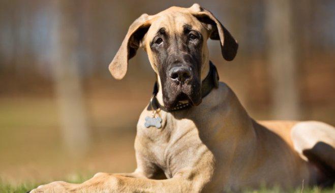 Собаки, выведенные в Германии: названия, фотографии и краткое описание немецких пород