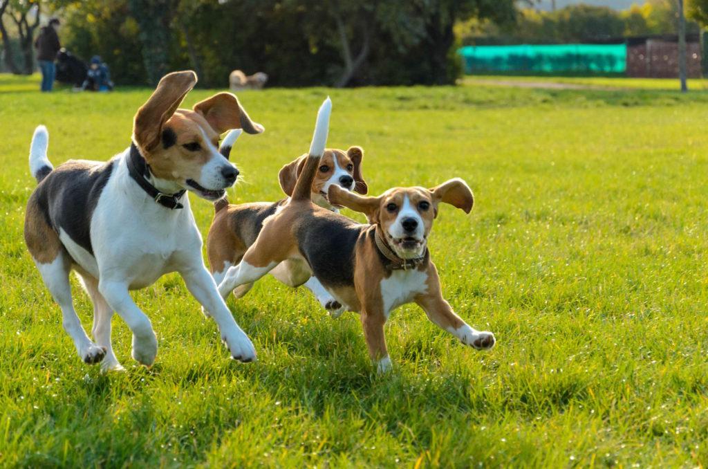Средние породы собак и их картинка